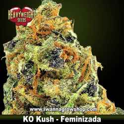 KO Kush – Feminizada – Heavyweight Seeds