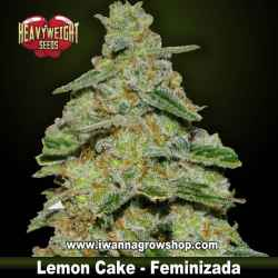 Lemon Cake – Feminizada – Heavyweight Seeds