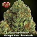 Midnight Mass – Feminizada – Heavyweight Seeds