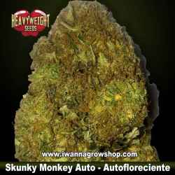 Skunky Monkey Auto – Autofloreciente – Heavyweight Seeds