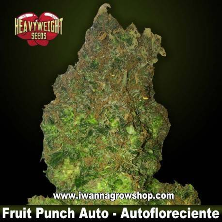 Fruit Punch Auto – Autofloreciente – Heavyweight Seeds