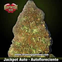 Jackpot Auto – Autofloreciente – Heavyweight Seeds