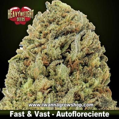 Fast & Vast Auto – Autofloreciente – Heavyweight Seeds
