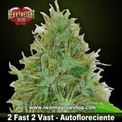2 Fast & 2 Vast Auto – Autofloreciente – Heavyweight Seeds