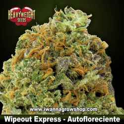 Wipeout Express – Autofloreciente – Heavyweight Seeds