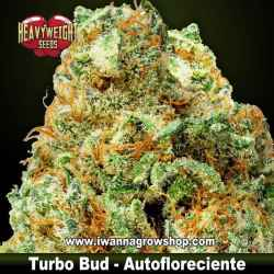 Turbo Bud Auto – Autofloreciente – Heavyweight Seeds