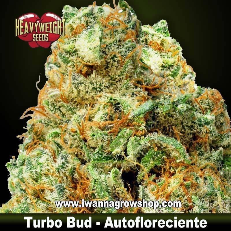 Turbo Bud Auto