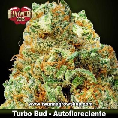 Turbo Bud Auto – Autofloreciente – Heavyweight Seeds