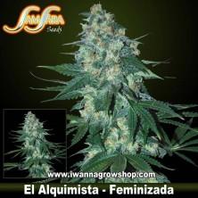 El Alquimista – Feminizada – Samsara Seeds