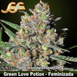 Green Love Potion – Feminizada – Samsara Seeds