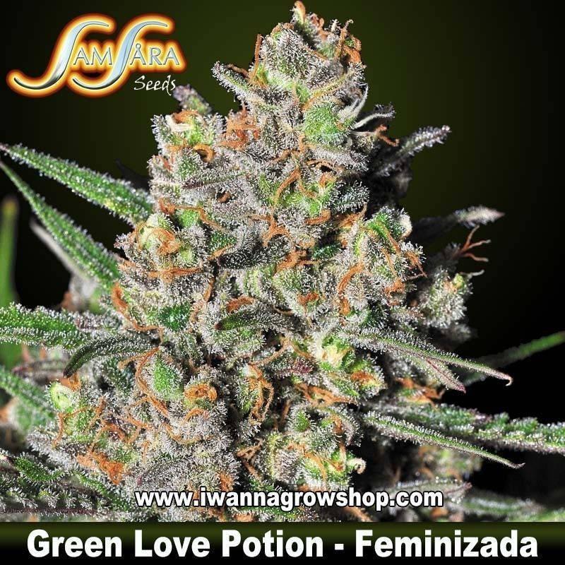 Green Love Potion