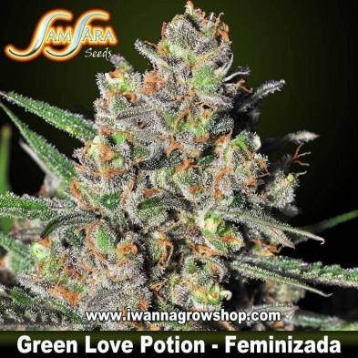 Green Love Potion – Feminizada – Samsara Seeds