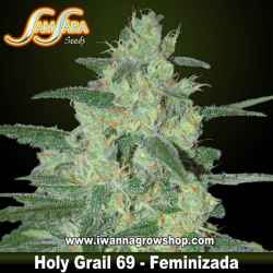 Holy Grail 69 – Feminizada – Samsara Seeds