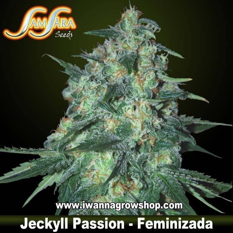 Jekyll Passion – Feminizada – Samsara Seeds