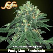Punky Lion – Feminizada – Samsara Seeds