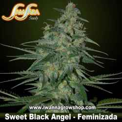 Sweet Black Angel – Feminizada – Samsara Seeds