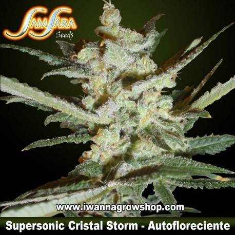 Supersonic Cristal Storm