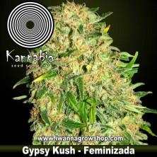 Gypsy Kush - Kannabia - Feminizada
