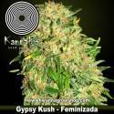 Gypsy Kush – Feminizada