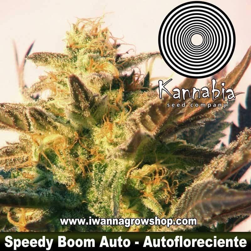Speedy Boom Auto