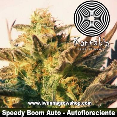 Speedy Boom Auto - Kannabia - Autofloreciente