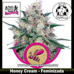 Honey Cream – Feminizada – Royal Queen