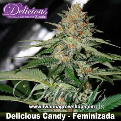 Delicious Candy – Feminizada – Delicious Seeds