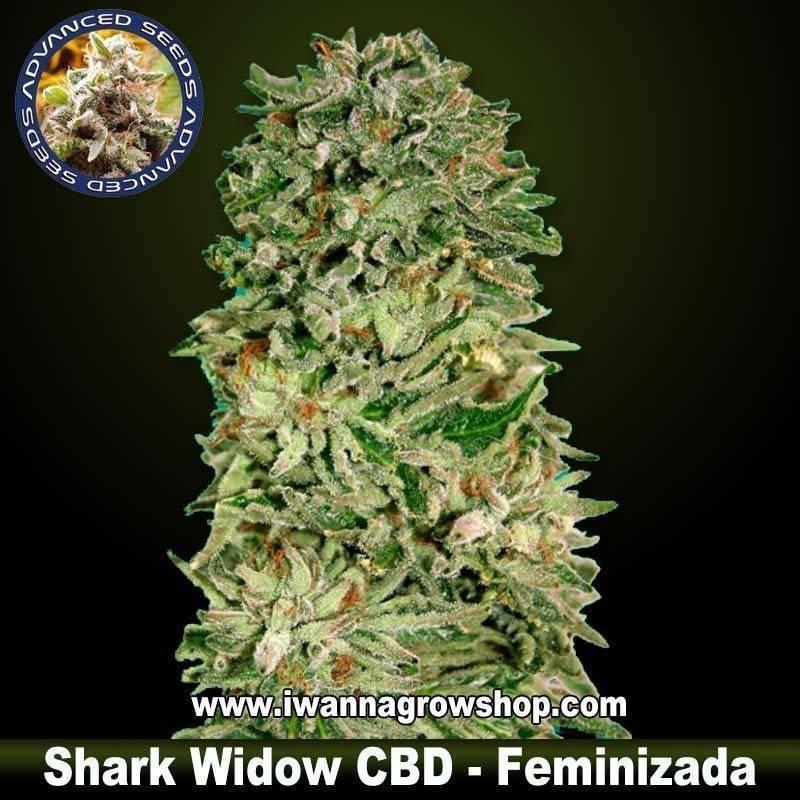 Shark Widow CBD – Feminizada – Advanced Seeds