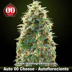 Auto 00 Cheese – Autofloreciente – 00 Seeds