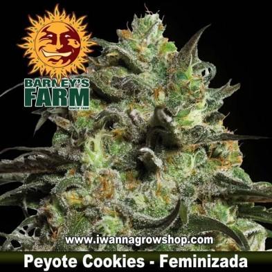 Peyote Cookies