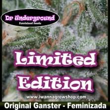 Original Ganster – Feminizada – DR Underground