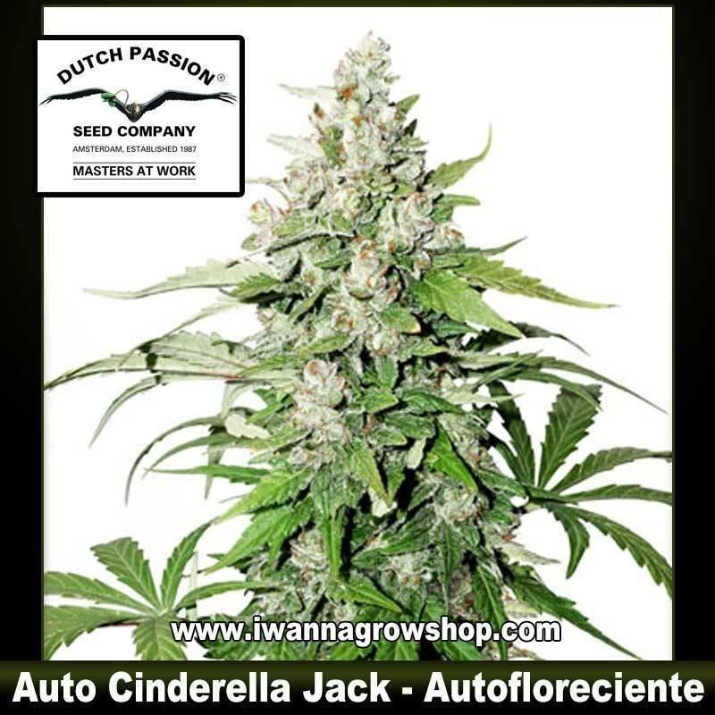 Auto Cinderella Jack