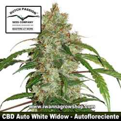 CBD Auto White Widow