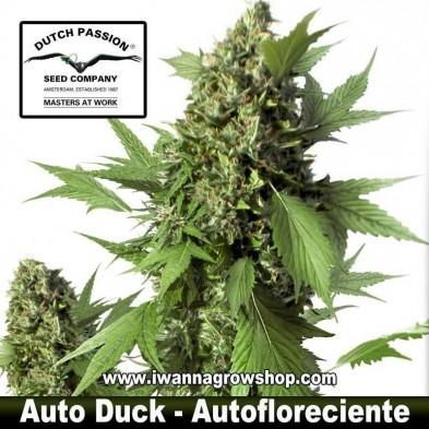 Auto Duck