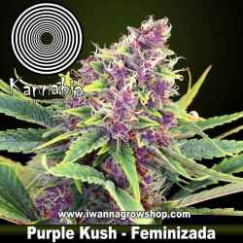 Purple Kush – Feminizada – Kannabia Seeds