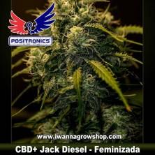 CBD+ Jack Diesel – Feminizada – Positronics Seeds