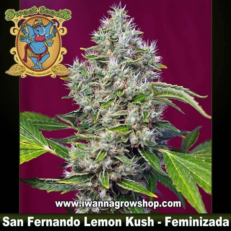 San Fernando Lemon Kush