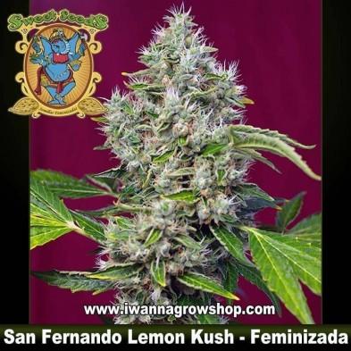 San Fernando Lemon Kush – Feminizada – Sweet Seeds