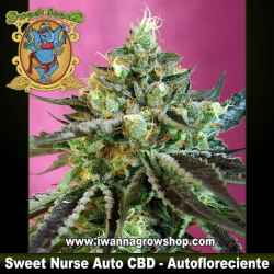 Sweet Nurse Auto CBD – Autofloreciente – Sweet Seeds