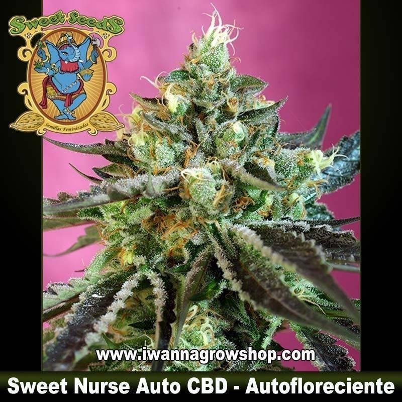 Sweet Nurse Auto CBD