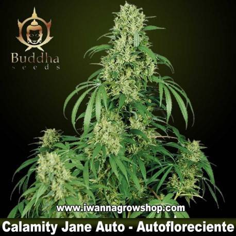 Calamity Jane Auto