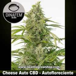 Cheese Auto CBD – Autofloreciente – Dinafem Seeds