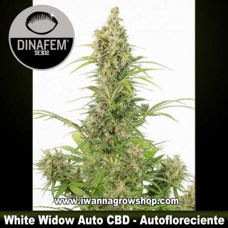 White Widow Auto CBD – Autofloreciente – Dinafem Seeds