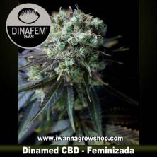 Dinamed CBD – Feminizada – Dinafem Seeds