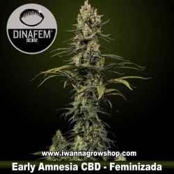 Early Amnesia CBD