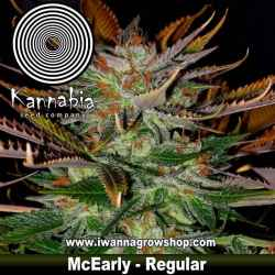 McEarly – Regular – Kannabia Seeds