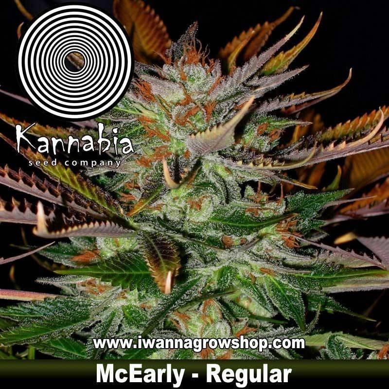 McEarly – Regular – Kannabia Seeds