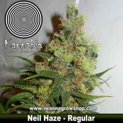 Neil Haze – Regular – Kannabia Seeds