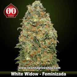 White Widow – Feminizada – 00 Seeds