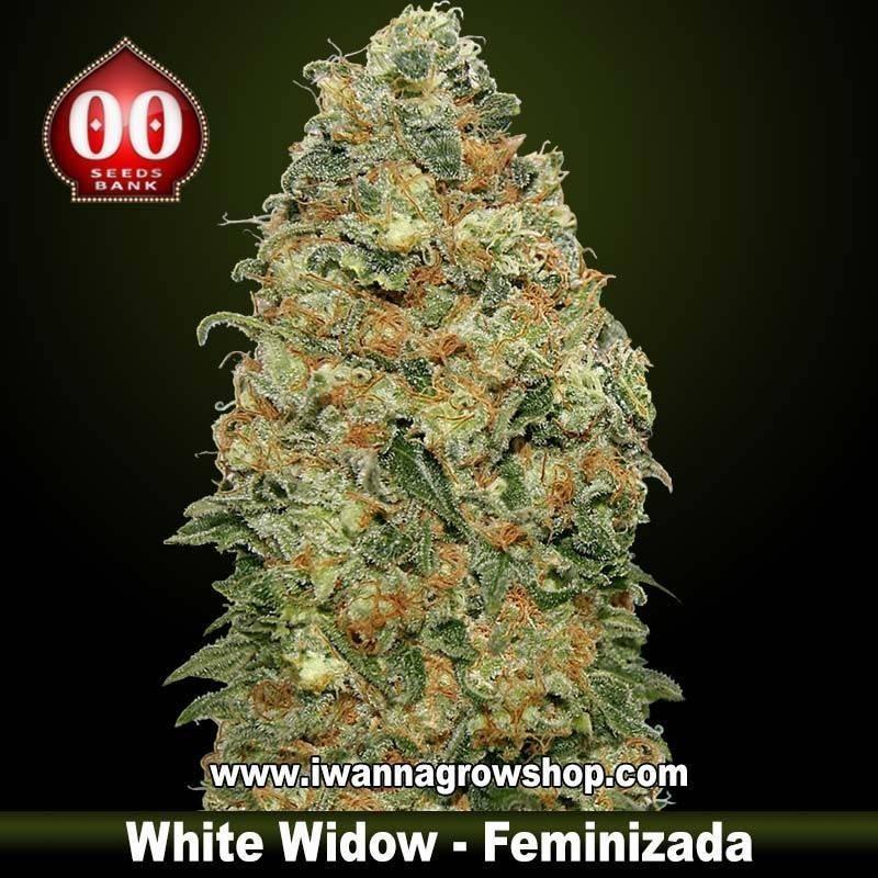White Widow – Feminizada – 00 Seeds